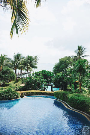 Phuket Thailand Beauty In Nature Coconut Island Day Growth Nature No People Outdoors Palm Tree Scenics Sea Sky Swimming Pool Tourist Resort Tranquil Scene Tranquility Tree Vacations Water
