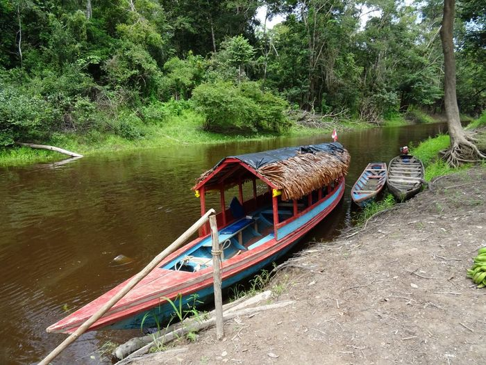 Amazonas Beauty In Nature Day Growth Iquitos  Mode Of Transport Moored Nature Nautical Vessel No People Outdoors People River Scenics Transportation Tree Water