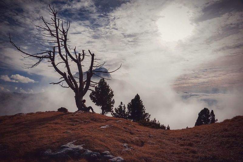 Trees on mountain against sky
