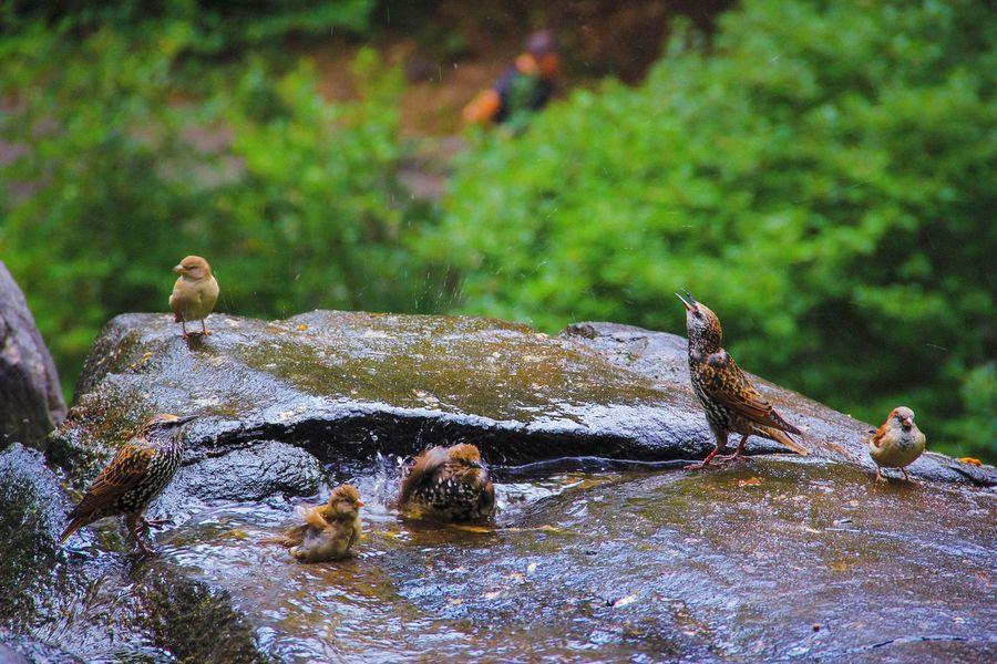Central Park - NYC Bird Photography Animal Wildlife