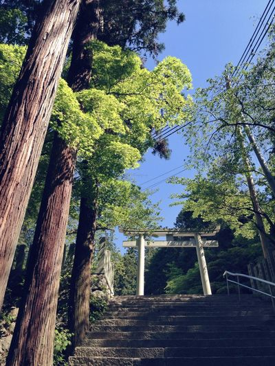 Relax Arashiyama Forest Green Gate White