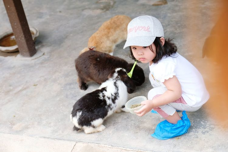 High Angle View Of Cute Girl Feeding Rabbits