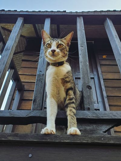 Portrait of a cat sitting on railing