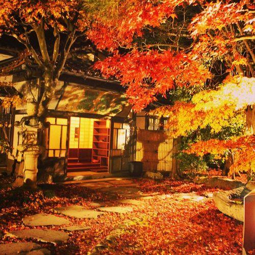 やっと南昌荘にこれました(*´∀`)紅葉のライトアップ最終日でした。南昌荘