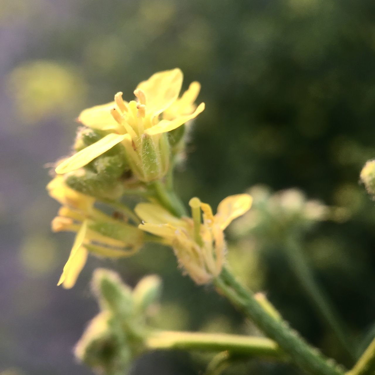 growth, nature, plant, flower, no people, selective focus, fragility, beauty in nature, yellow, close-up, day, outdoors, green color, freshness, flower head