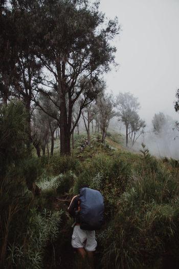 Rear view of woman walking on field in forest