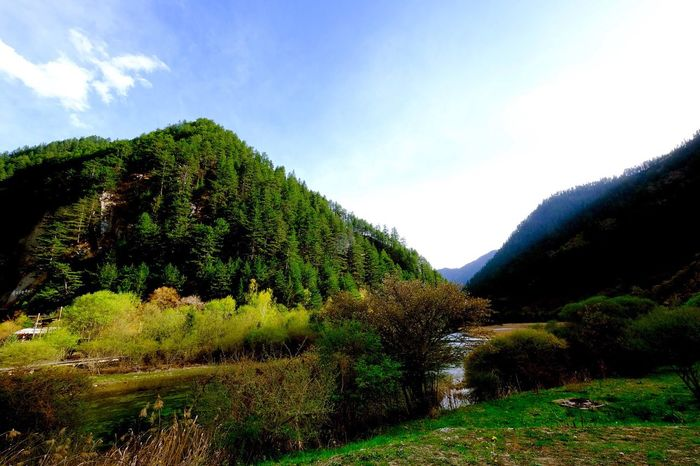 Jiuzhaigou National Park 九寨溝 China Jiuzhaigou National Park Jiuzhaigou Nature Growth Tranquility Tree Beauty In Nature Sky Tranquil Scene Vegetation Scenics Flora Outdoors Landscape Mountain (null)EyeEm Photooftheday Urban Still Life Photographer Close-up Photo Eye4photography