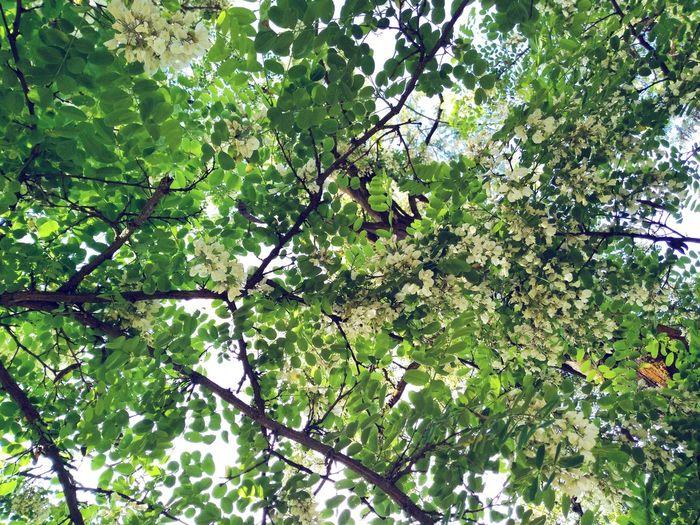 Tree Branch Backgrounds Full Frame Forest Leaf Leaves Green Plant Life Greenery Blossoming  Vegetation Blossom