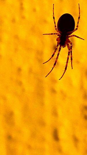 """""""Dal ragno s'impara a tessere"""" Ragno Spider Beautiful Nature"""