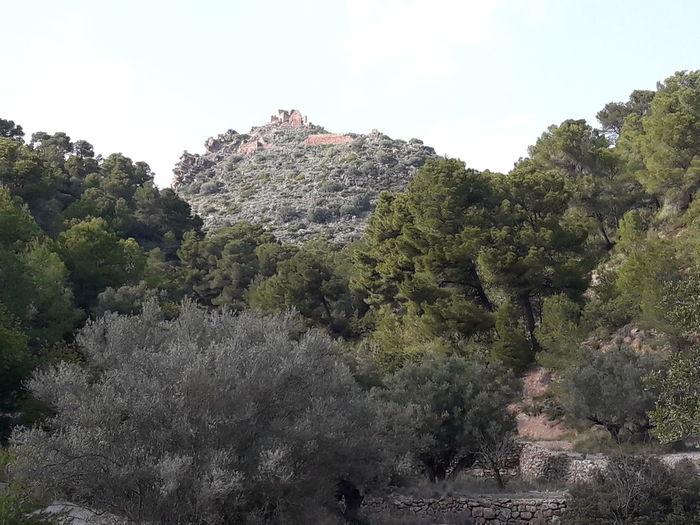 Calderona Olocau Valencia, Spain Tree Sky
