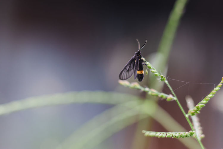 Selective Focus Close-up Nature Plant Beauty In Nature No People Fragility Day Growth Vulnerability  Outdoors Insect Invertebrate Animal Wildlife One Animal Animals In The Wild Animal Themes Animal Plant Part Leaf Green Color Animal Wing Butterfly - Insect Blade Of Grass