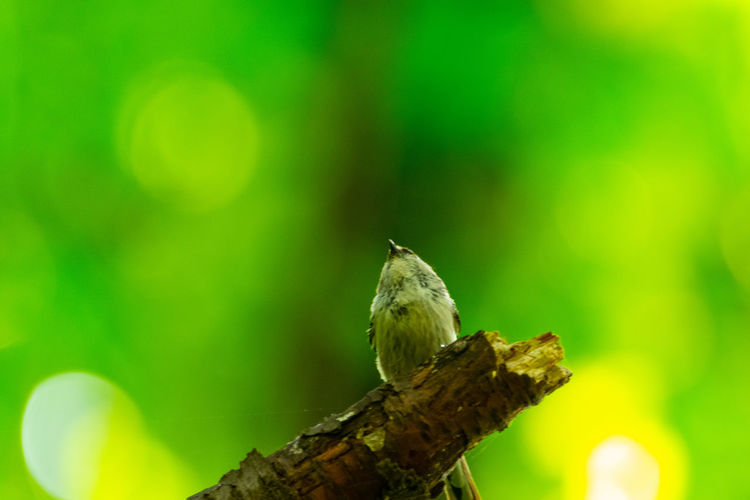 Fresh green Bird Photography Perching Bird Tree Close-up Animal Themes Green Color