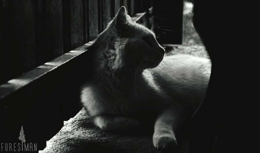 Cat Blackandwhite Photography Highcontrast