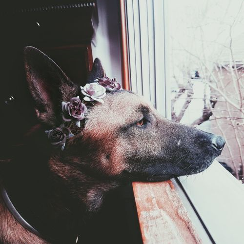 Close-up of dog with window