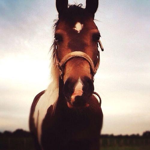 Horse Horse <3