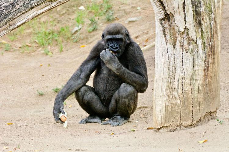 Monkeys sitting in zoo