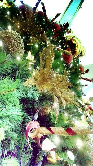 Christmas Tree is here!!! Hrd_collection