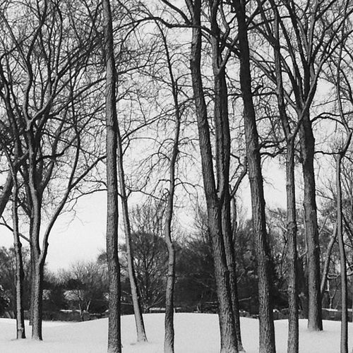 Snow on the #9thhole #bw #bnw #bw_crew #bw_lovers #blackandwhite #insta_pic_bw #most_deserving_bw Blackandwhite Bw Bnw Bwmasters Bw_lovers Bw_crew Most_deserving_bw Bnw_life Insta_pic_bw Branching_out 9thhole