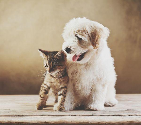 Cat and dog sitting on wood