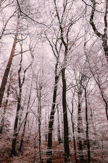 Tree Nature No People Branch Growth Beauty In Nature Backgrounds Outdoors Full Frame Scenics Close-up Landscape Cold Temperature Forest Beauty In Nature Nature Snow Winter Fog Cloud - Sky Snowing GrassDay Sky Fragility