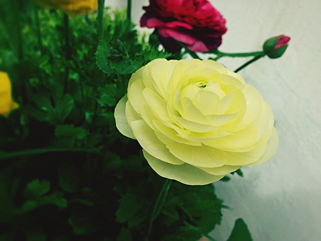 Calm Flower Nature Fragility Beauty In Nature Growth Petal Freshness Green Color Close-up Plant Blooming Flower Head No People Day Outdoors Plant Growth Nature Freshness Beauty In Nature Yellow Occasional Photography