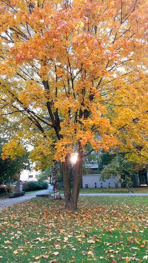 Herbst 2016 Beauty In Nature Tree Nature No People Outdoors Schöne Aussicht 😍 Nature Fresh Nice Cool Natur Mega😍❤ Schönes Weter Sonnenuntergang 🌇 Ferien2016 Swizzerland Sonne