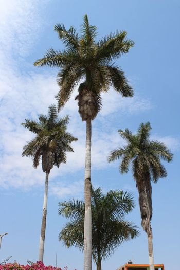 Nature Palm Tree 🌴 Summer Beauty In Nature