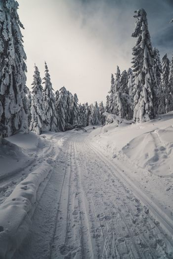 Winter Day Winter Road Natural Park Snow Road Snowy Mountain Range Mountain View Beautiful Nature Snow Cold Temperature Winter Tree Plant Sky Nature Covering Day Tranquility Tranquil Scene Beauty In Nature Land No People Scenics - Nature Tire Track Pine Tree Frozen Landscape Coniferous Tree