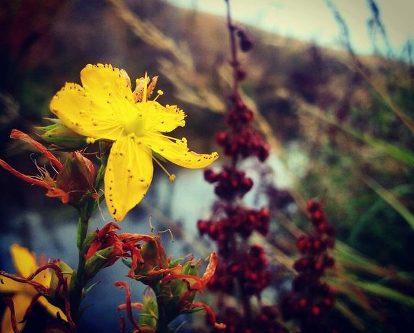 Never ceases to amaze me how unique and beautiful every flower is.❤📷🌻 * * Flower Nature Yellow Fragility Beauty In Nature No People Love Photography Quickpic