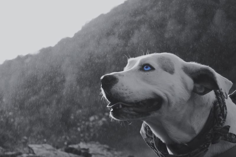 Close-up of dog against sky