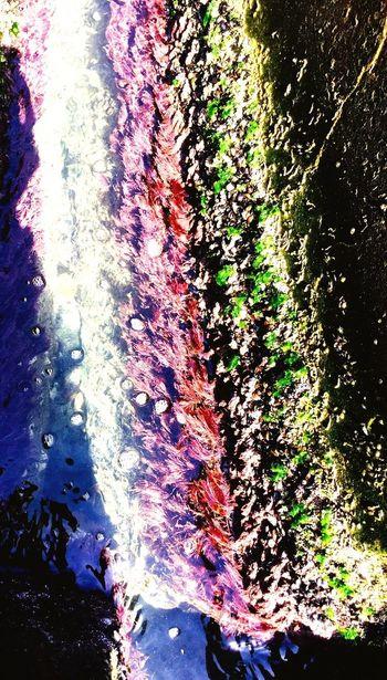 Multi color on rock