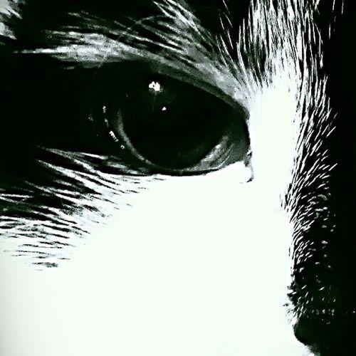 Cat Eye 4 Nature Catlovers