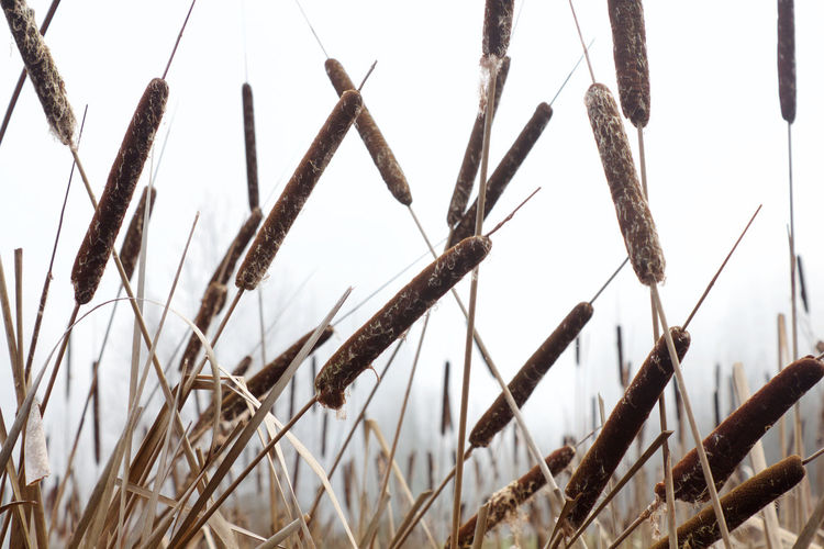 Plant Nature No People Tranquility Close-up Day Growth Beauty In Nature Grass Outdoors Plant Stem Reeds