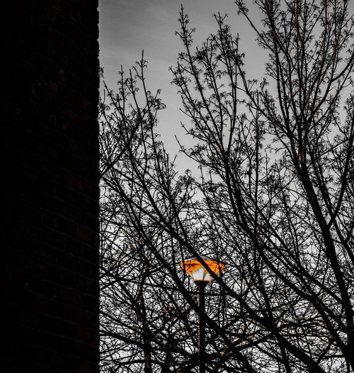 One Light Low Angle View Tree Sky Bare Tree No People Built Structure Building Exterior Outdoors Architecture Day Street Lamp Orange Colour Orange Black And White There Shines A Light Between Buildings Welcome To Black