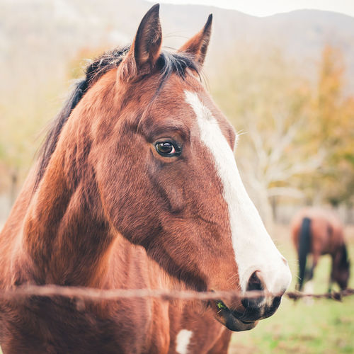 Brown Eyes EyeEm Best Shots Animal Head  Animal Themes Brown Close-up Day Domestic Animals Focus On Foreground Horse Horse Photography  Mammal Nature No People One Animal Outdoors Portrait