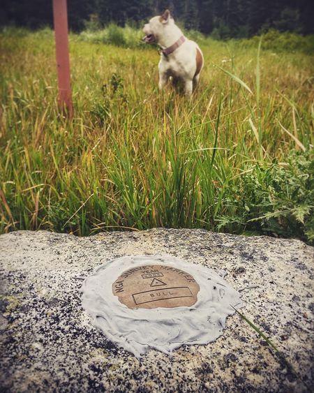 Home Is Where The Art Is Hikingadventures Nature Get Outside Bitterroot National Forest Montana American Bulldog Survey Marker Dogs Of EyeEm Dogslife Finding New Frontiers Pet Portraits