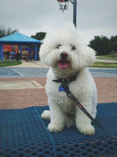 Dog at Park Dog Park Windy Day