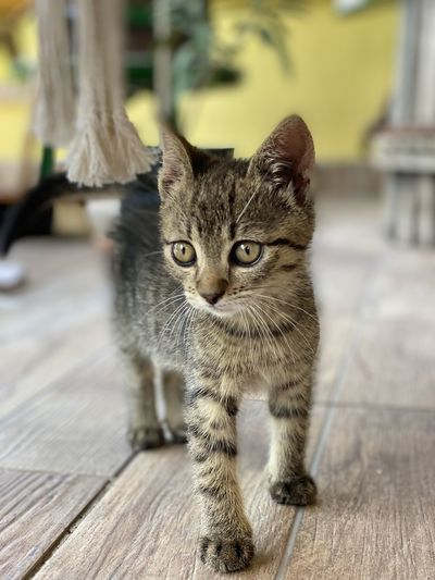 Portrait of tabby kitten on wood