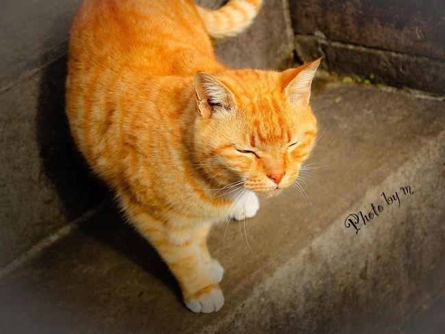 Cat Cat♡ Stray Cat 野良猫 猫 Animal Playing With The Animals 茶猫 Cat Lovers Photography