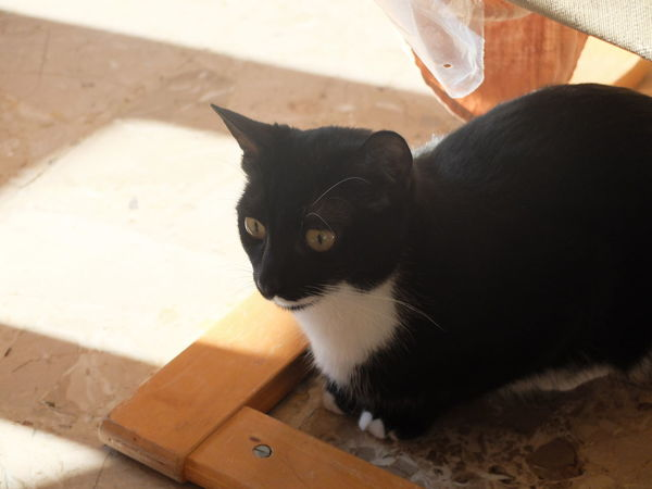 Cat Domestic Cat One Animal Portrait