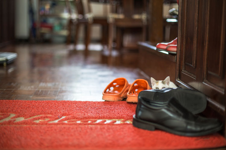 Where is the cat? Animal Capture The Moment Carpet Cat Cat Lovers Cats Eye EyeEm Best Shots EyeEm Gallery Focus On Foreground Funny Hidden Hidding Indoors  Modern Ninja Pet Photography  Pets Red Selective Focus Shoe Small Spy Spying White