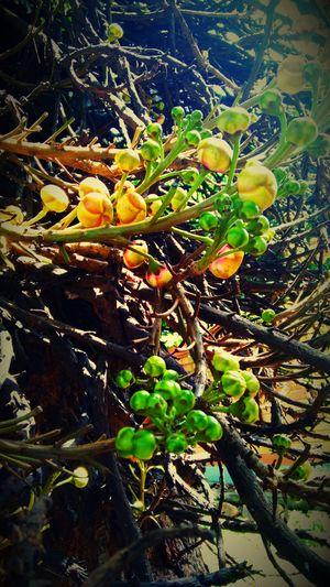 Plant Tree Close-up