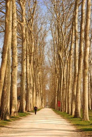 #Gardens Of Versailles #landscape #nature #photography #Paris #versailles Bare Tree Beauty In Nature Day Diminishing Perspective Footpath Forest Full Length Leisure Activity Lifestyles Narrow Nature Outdoors Pathway Road The Way Forward Tranquil Scene Tranquility Tree Tree Trunk Treelined Vanishing Point