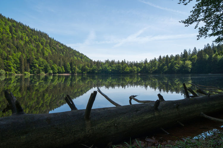 Lake Tree Plant Water Sky Tranquility Reflection Tranquil Scene Scenics - Nature Nature Beauty In Nature Day Cloud - Sky Green Color Non-urban Scene Log Growth Forest No People Wood Driftwood Feldsee Black Forest