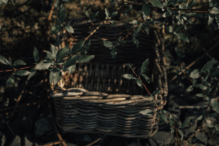 Green Basket Beauty In Nature Branch Brown Bush Close-up Day Dry Focus On Foreground Growth High Angle View Land Leaf Leaves Nature No People Outdoors Photography Plant Plant Part Selective Focus Tranquility Tree Twig