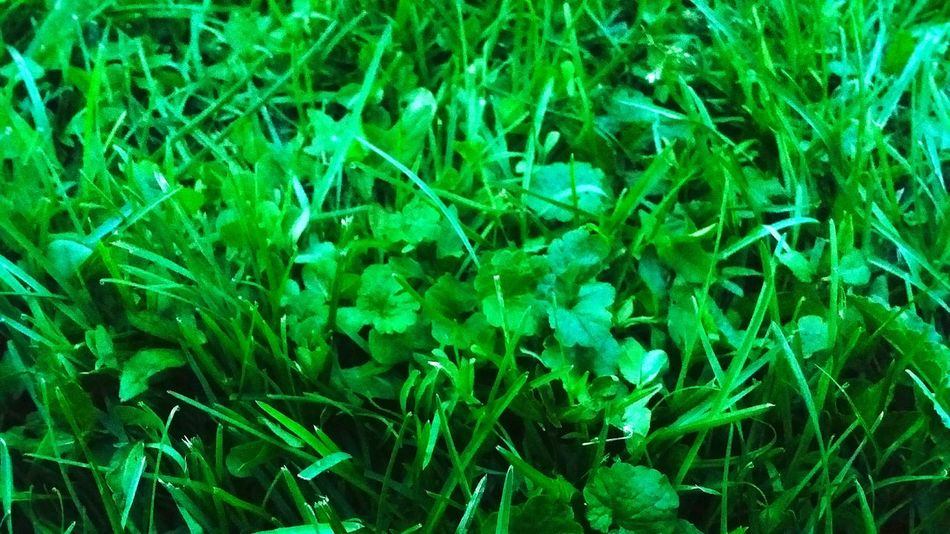 Growth Getting Back To Nature Outdoors❤ Check This Out Greenery Nature_collection Beauty In Nature Grass Photography Nature On Your Doorstep Beautiful Nature Naturelovers Kentucky  Backyard Fun
