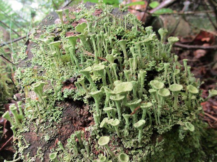 Lichen Beauty