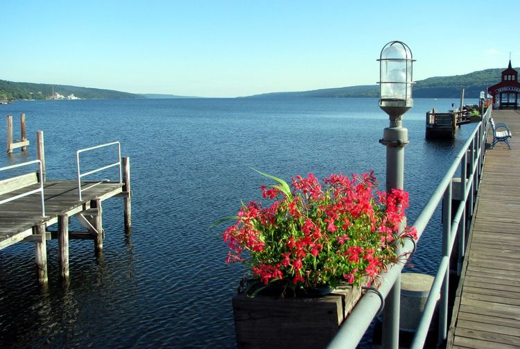 New York SenecaLake Beauty In Nature Clear Sky Flowering Plant Mountain New York Photography New York State Outdoors Tranquility Water
