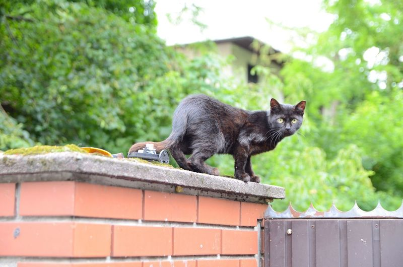 Portrait Of Black Cat Standing On Retaining Wall