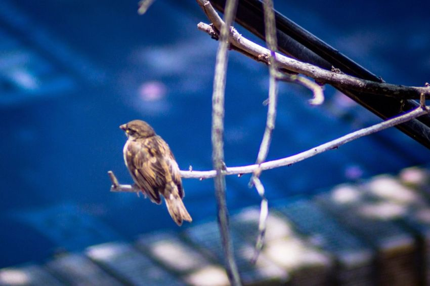 EyeEm Selects Animal Vertebrate Animal Wildlife Animal Themes Bird Animals In The Wild Perching One Animal Focus On Foreground Tree Beauty In Nature Sparrow Nature Selective Focus Branch